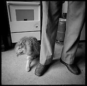 Katze und Pantoffeln in der Küche. Chat et pantoufles à la cuisine. Cat and slippers in the kitchen. Hoferalpje, Saas-tal, Wallis. Hoferalpje dans la vallée de Saas, Valais,© Romano P. Riedo