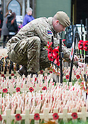 © Licensed to London News Pictures. 05/11/2014. London, UK. Lance Sergeant French of the Scots Guards plants wooden poppy crosses in his regiment's plot in the field which opens to the public tomorrow (Thursday 6th November) Every November the annual Field of Remembrance at Westminster Abbey is organised and run by The Poppy Factory. Over 350 plots for regimental and other associations are laid out in the area between Westminster Abbey and St. Margaret's Church. Remembrance crosses are provided so that ex-Service men and women, as well as members of the public, can plant a cross in memory of their fallen comrades and loved ones.<br /> . Photo credit : Stephen Simpson/LNP