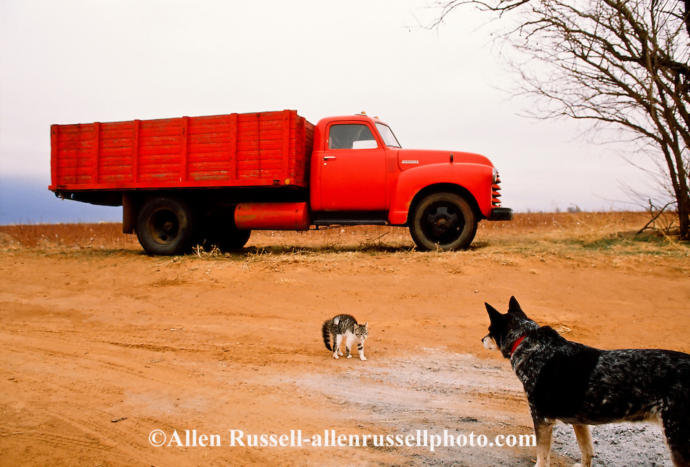 Farm cat and dog in confrontation, Oklahoma, <br /> PROPERTY RELEASED