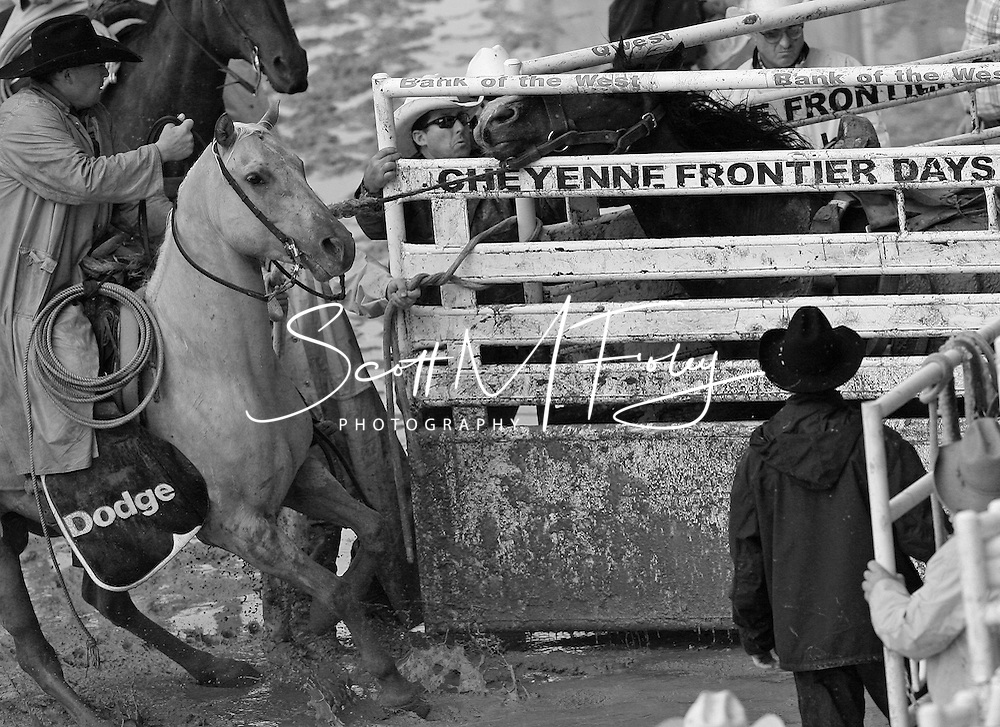 Behind the scenes, getting a wild bronc to set in the shute, 28 July 2007, Cheyenne Frontier Days