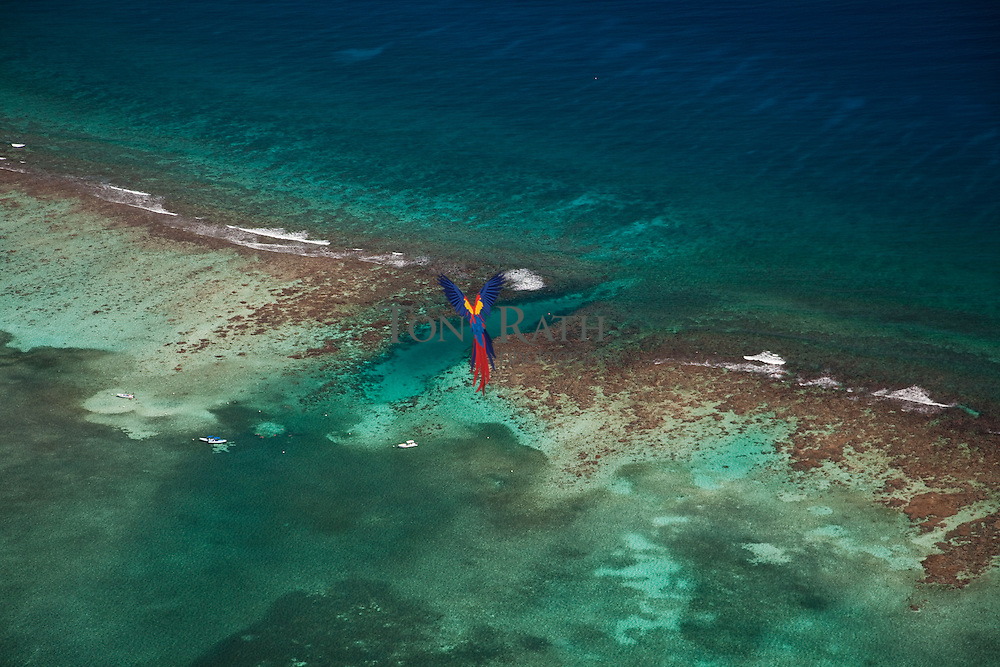 Aerial view Hol Chan Marine Reserve near San Pedro, Belize