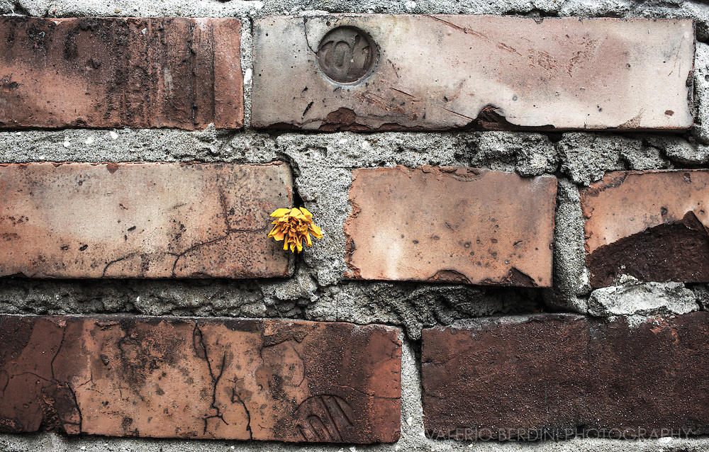 """A flower has been left in one of the few preserved fragment of the ghetto wall located in 55 Sienna Street. The ghetto was almost entirely leveled during the uprising; however, a number of buildings and streets survived, mostly in the """"small ghetto"""" area, which had been included into the Aryan part of the city in August 1942 and was not involved in the fighting."""