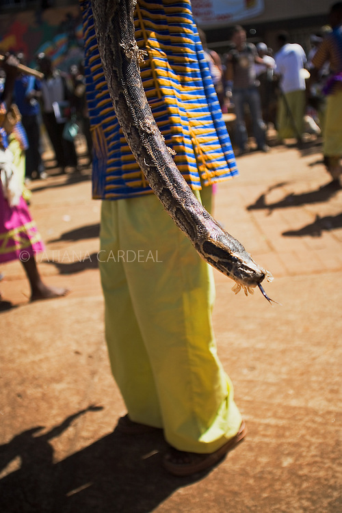 An African Rock Python with a Tanzanian sorcerer assistant at the Moi International Sports Complex, during the VII World Social Forum. Nairobi, Kenya, Africa.