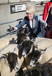 © Licensed to London News Pictures. 27/09/2015. London, UK. Barbara Windsor exercises her right as a Freeman of the City of London to drive a flock of sheep across London Bridge. Photo credit: Peter Macdiarmid/LNP