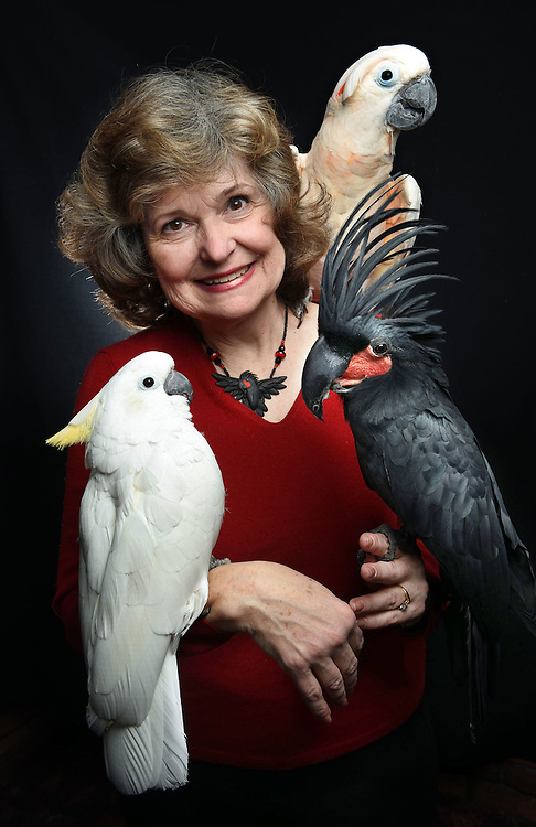 Photo by Mara Lavitt -- Special to the Hartford Courant<br /> March 21, 2015, Middletown<br /> The eighth FeatherFest was held in Middletown by the Connecticut Parrot Society providing visitors with education about parrots and other birds. Ann Kopp of Ridgefield with cockatoos Marty, left, a triton, Wyatt on her shoulder, a Moluccan, and Hank, a black palm. Kopp began with parrots because her partner Ted Bouthillier is allergic to fur.