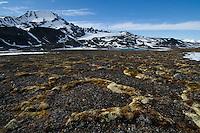 Polygones, Permafrost ground<br /> Signehamna, Svalbard<br /> Norway