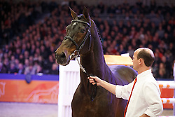 Emilion<br /> KWPN Stallion Selection - 's Hertogenbosch 2014<br /> © Dirk Caremans
