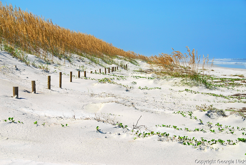 Sand dunes, sea oats, fencing, vines and grass protect the dunes on St. Augustine Beach in Anastasia State Park. The park is located in St. Augustine, Florida.