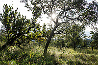 Zululand bushveld trees silhouetted by the sun, Thanda Private Game Reserve, KwaZulu Natal, South Africa