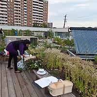 A rooftop vegetable garden in Toronto (Access Alliance)