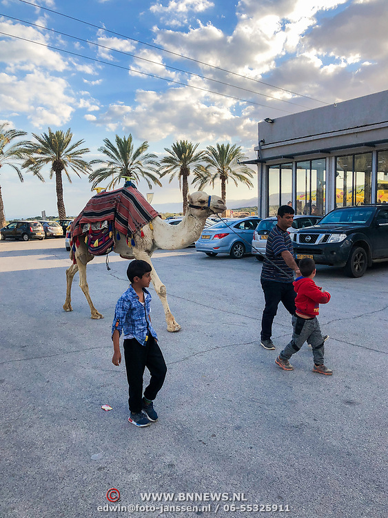 ISR/Tel Aviv/20180308 - Vakantie Israel, kameel