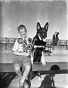 Mater Rodney Ross, son of Mr R Ross, Queen St., Ballymoney, with Mr W Murphy's German Shepherd Dog 'Koleen of Wolfhill' at Bray Dog Show (Winner best in show).16/08/1952