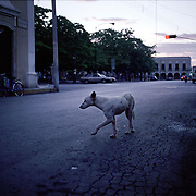 A stray dog crosses the street in the early morning in Valladolid, Yucatan, Eastern Mexico