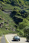 Eifel, Ahrtal bei Bonn..Altenahr, Straße durch das Ahrtal, steile Weinberge,