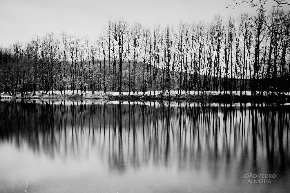 Naked trees by Sanabria lake