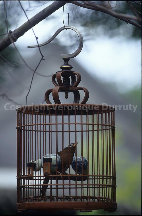 SPEAKING BIRD. BEIJING, CHINA.