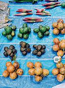 Selection of Malaysian fruits