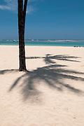 The shadow of a palm tree along Ala Moana Beach in Honolulu, Hawaii at Lahaina Noon.