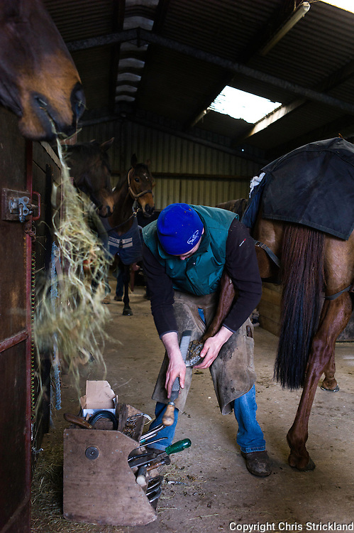 A farrier puts new shoes on a racehorse while its stable mates watch on and enjoy munching on hay.