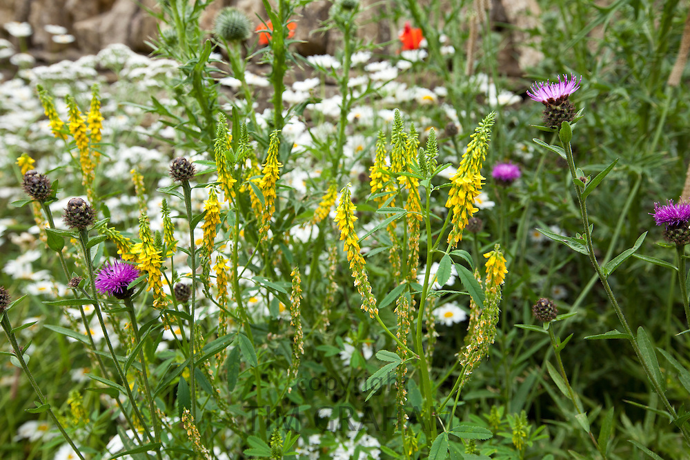 Wildflowers in English cottage garden in Swinbrook in The Cotswolds, Oxfordshire, UK