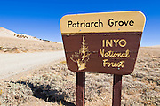 Sign at the Patriarch Grove, Ancient Bristlecone Pine Forest, Inyo National Forest, White Mountains, California