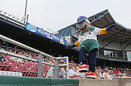 Kernels mascot Mr. Shucks walks along the wall during the game between the Clinton LumberKings and the Cedar Rapids Kernels at Veterans Memorial Stadium in Cedar Rapids on Monday, September 3, 2012.