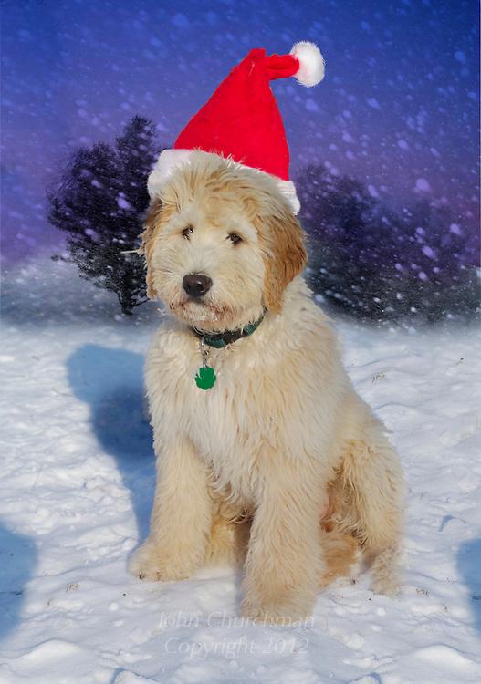 Quinn wears Christmas had