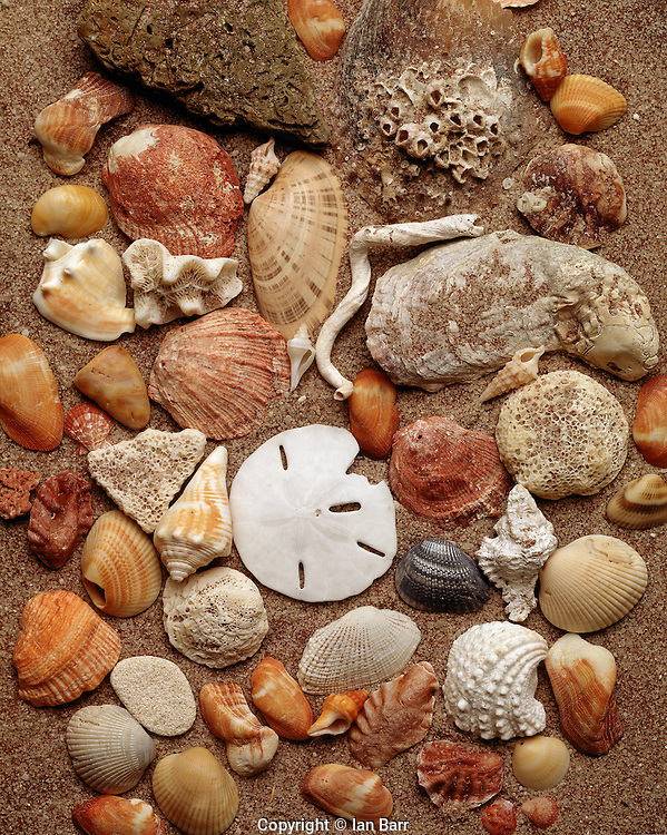 Still life of seashells.