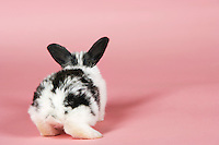 Pet rabbit on pink background back view