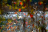 Abstract autumn pond.