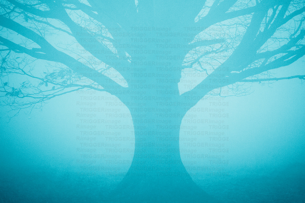 A single symmetrical tree in fog toned blue