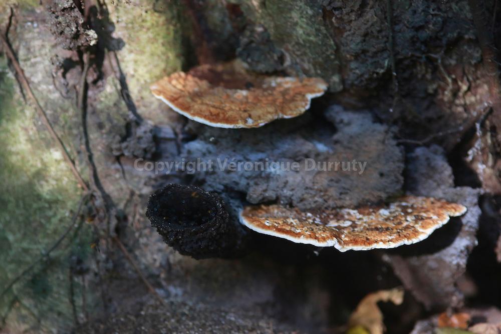 Mushroom; Corcovado National park, Costa Rica // Champignon, Parc national Corcovado, Costa Rica