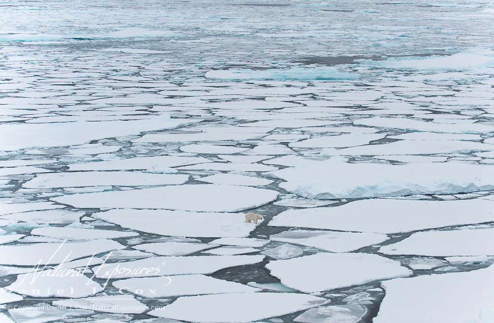 A polar bear makes its way across broken ice of the Beaufort Sea.