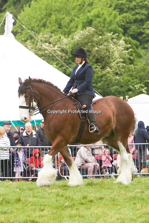 Nathalie Cross riding Miss L Parr's VALLIANTS JESTER<br /> 2nd Ridden Heavy Horse Class