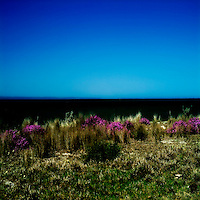 Sand dunes with grass and flowers