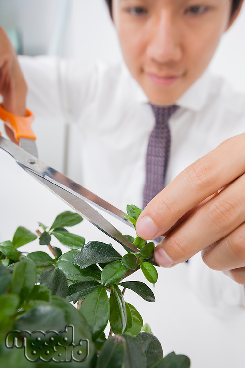 Close-up view of Asian businessman pruning plant