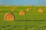 bales<br /> Estevan<br /> Saskatchewan<br /> Canada