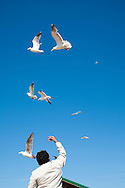 Feeding the seagulls along the boardwalk in Old Town Bandon Oregon