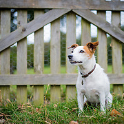 Images of Biscuit the Jack Russell at Withdean Park