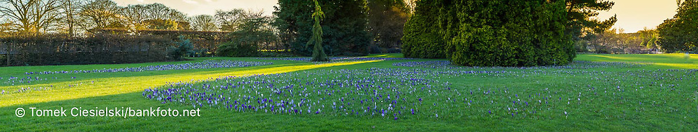 View for spring lawn in RHS Wisley garden