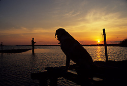 Stock photo of the silhouette of a dog sitting on a pier as his owner fishes from the water's edge at sunset