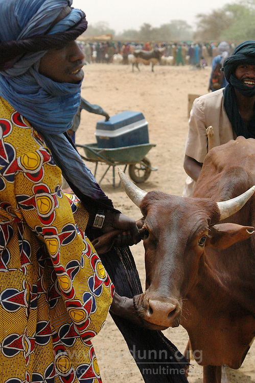 BURKINA FASO, Gorom-Gorom, 2007. Tuareg traders bring a young cow for a buyer's inspection at Gorom-Gorom's Thursday market, which serves the whole region.