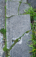 Cracks in a sidewalk with moss and grass growing through the cracks.