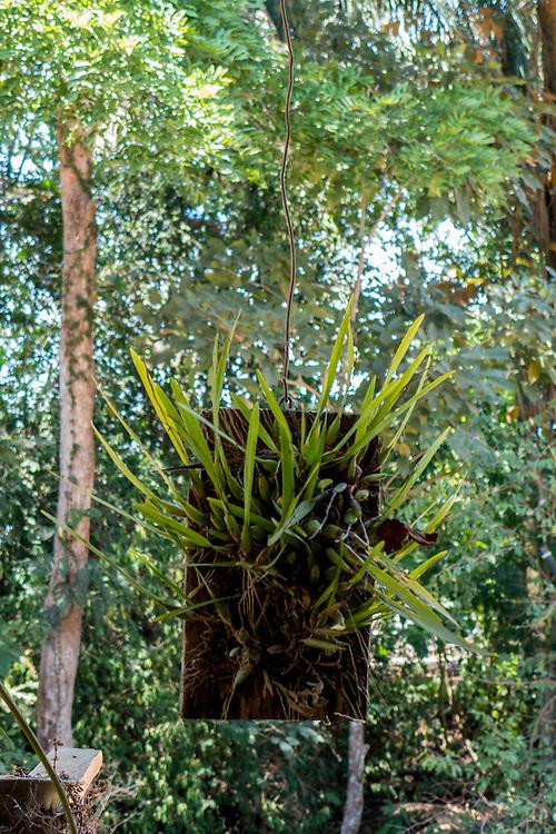Garden in Cost Rica