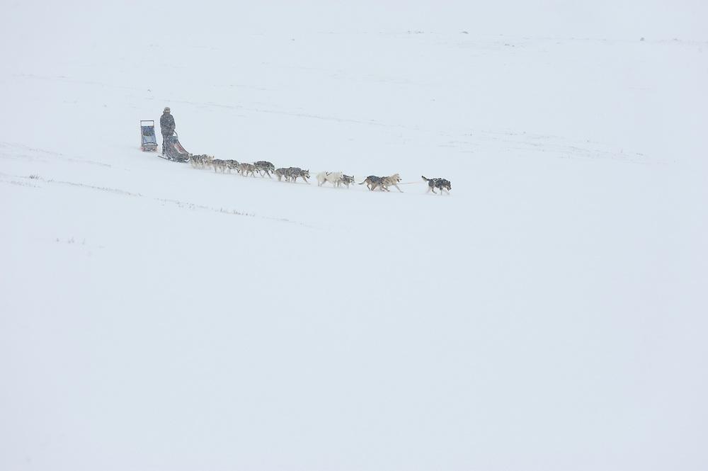 Dog sledge, dovrefjell national park , norway, february,