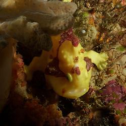 Dive Spot: Venus Hill