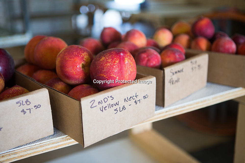 In addition to peaches, nectarines are currently available at Cherry Creek Orchards in Pontotoc.
