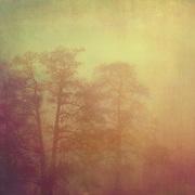 Trees in November fog. Coloured photograph.<br /> Prints: http://society6.com/DirkWuestenhagenImagery/slumber-DCJ