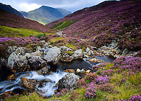 The captivating mass of purple heather covers the hillsides in late summer adding even more charm to the Lakeland steams as they wind there way down to the valleys below.