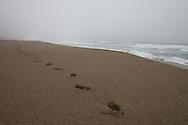 Footprints in the sand with fog, California Coast